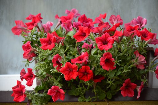 Flowers, Terrace, Nature