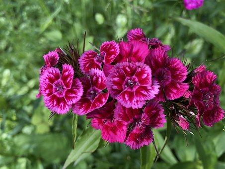Flower, Wild Flower, Nature, Wild, Wild Flowers, Plant