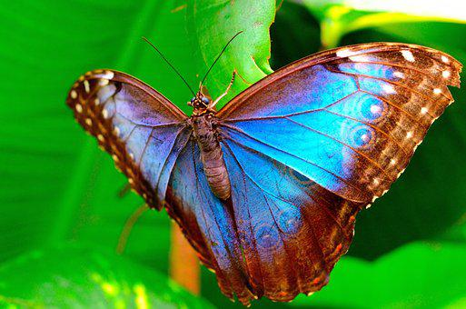 Butterfly, Macro, Insect, Colorful, Wings, Garden, Blue