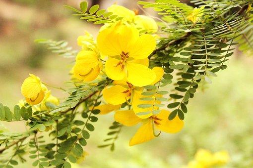 Nature, Yellow, Bright, Spring, Vibrant, Natural