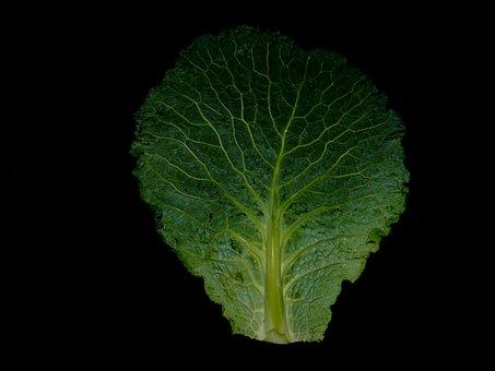 Savoy, Kohl, Autumn, Stew, Vegetables, Green Leaves