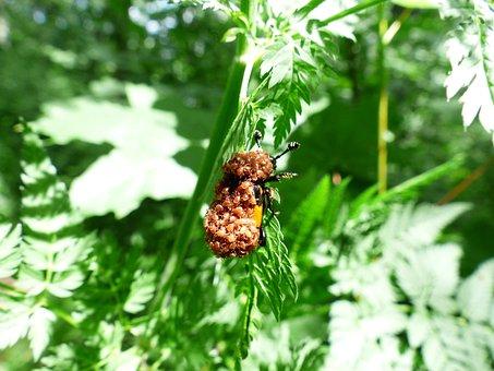 Beetle, Mites, Mite Infestation, Lice, Infestation