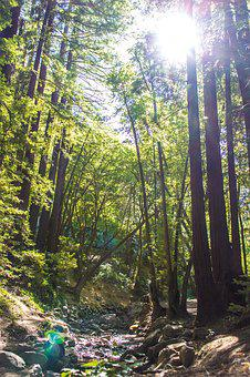 Forest, Natural, Brook, Sol, Green, Light, Trees