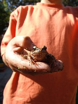 Frog, Toad, Child, Nature, Animal, Wildlife, Green
