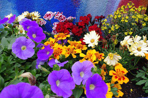 Colorful Flowers, Farbenpracht, B, Colorful, Nature