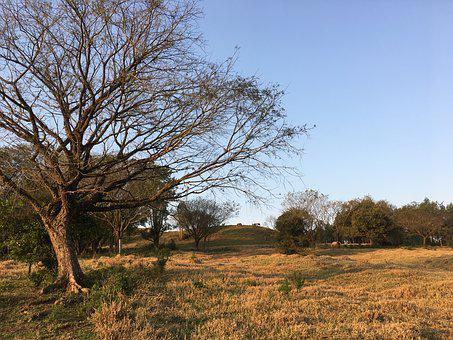 Tree, Sol, Dry, Sunset, Against Light, Twigs