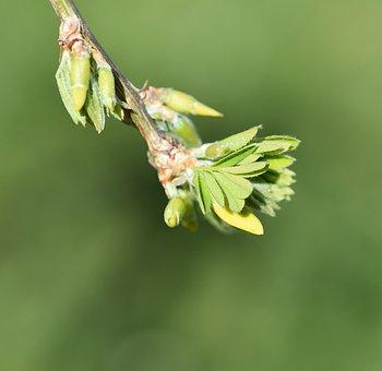 Branch, Tree, Hanging Elm, Leaves, Engine, Spring