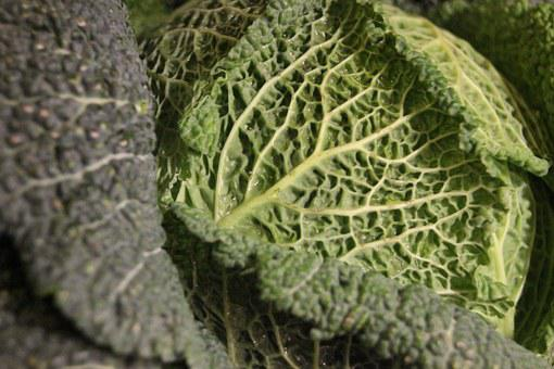 Savoy Cabbage, Kohl, Healthy, Vegetables, Green, Leaves