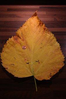 Elm Leaf, Mountain Elm, Size Comparison, Cent, Coin