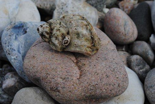 Clam, Beach, Must