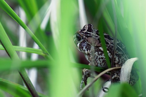 Frog, Nature, Green, Grass, Cute, Animal, Leaf