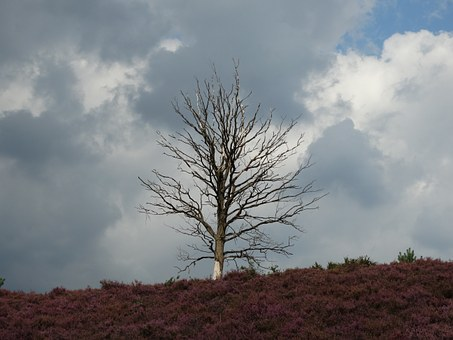 Hei, Lonely Tree, Nature, Threatening Sky, Netherlands