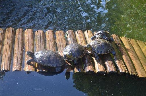 Turtles, Botanical Garden, Rio De Janeiro, Nature