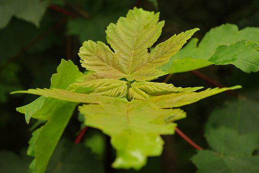 Close Up, Green Plant, Green, Plant, Nature, Leaves
