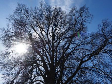 Elm, Tree, Huge, Branches, Aesthetic, Powerful, Large