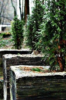 Tree Of Life, Pulp, Thuja Lebensbaum, Ordinary Thuja