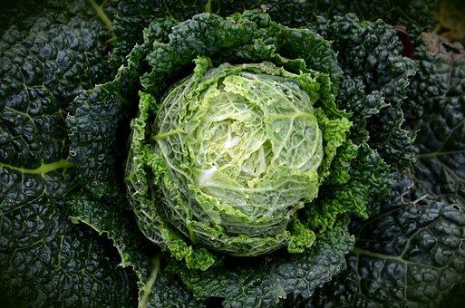 Savoy, Kohl, Vegetables, Healthy, Savoy Cabbage, Green