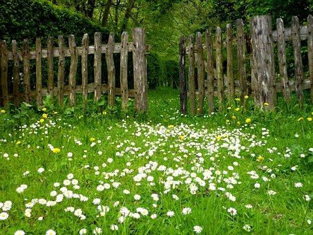 Garden, Meadow, Fence, Plant, Daisy, Flowers, Spring
