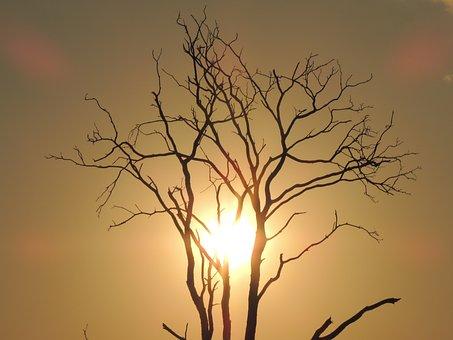 Sunset, Eventide, Sol, Horizon, Against Light, Farm