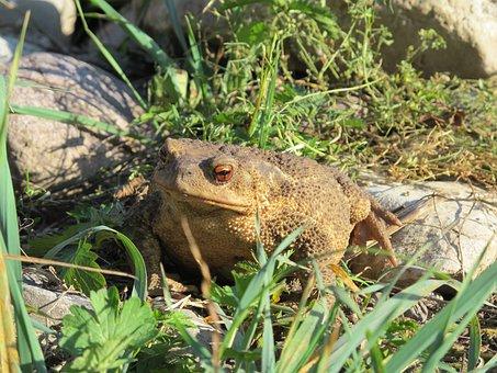 Toad, Gerardo, Big Toad