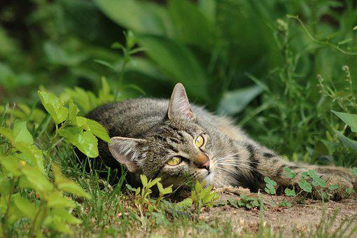 Domestic Cat, Animal, Pet, Relax, Green