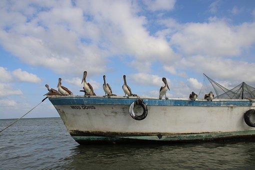 Guatemala, Nature, Birds, Boat