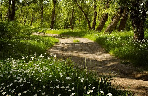 Forest, Flowers, Summer, Road, Blooming, Nature, Beauty