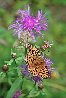 Butterfly, Meadow, Flower, Flora, Fauna, Nature