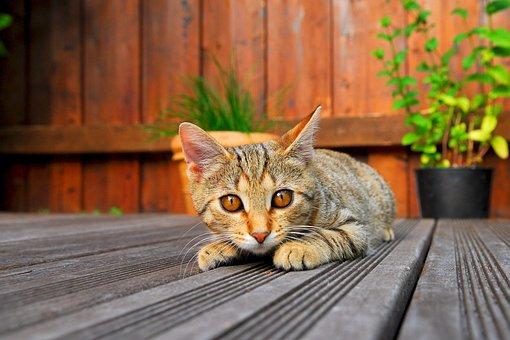 Cat, Young Cat, Kitten, Domestic Cat, Curious, Pet