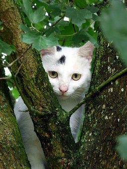 Cat, White, Animal, Channel, Water, Tree, Branch, Eyes
