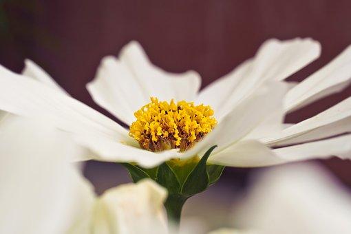 Flower, Gerbera, Blossom, Bloom, Nature, Close, Yellow