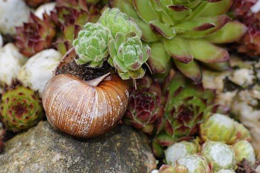 Stone Wurz, Garden, Snail Shell, Close