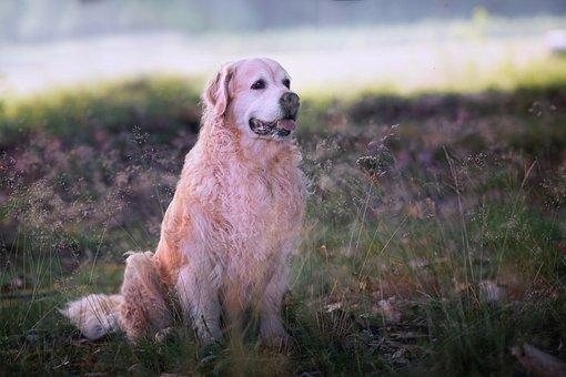 Dog, Forest, Animal, Guard Dog, Big Dog, Dog Breed