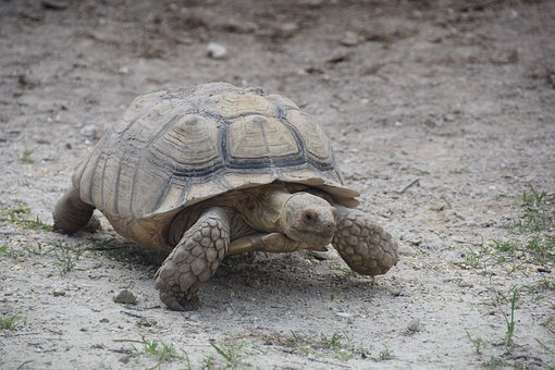 Everglades, Turtle, Florida