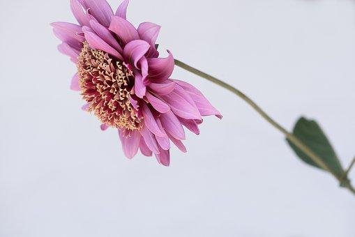 Flower, Dusky Pink, Pink, Pink Flower, Blossom, Bloom