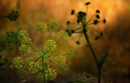 Plant, Green, Park, Nature, Leaf, Flower, Summer