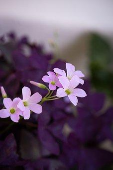 Flower, Pink, Pink Flower, Blossom, Bloom