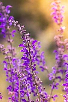 Flower, Plant, Purple, Purple Flower, Flowers