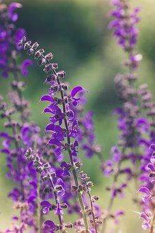 Flower, Purple, Purple Flowers, Flowers, Flower Purple