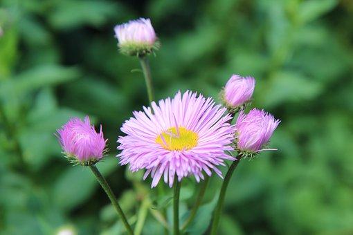 Pink Flower, Flowering, Pink Flowers, Rose Petals