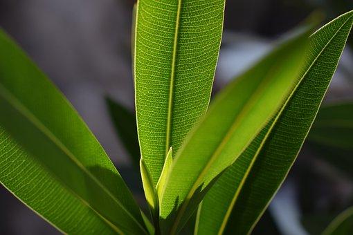 Foliage, Plant, Green, Leaf Veins, Leaves, New Drive