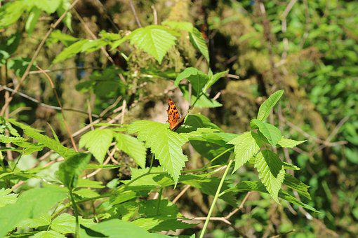 Woods, Butterfly, Green, Orange, Leaf, Hiking, Nature