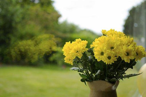 Flowers, Yellow, Yellow Flowers, Nature, Green, Summer