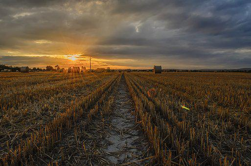 Sunset, Field, Sunlight, Nature, Light, Landscape