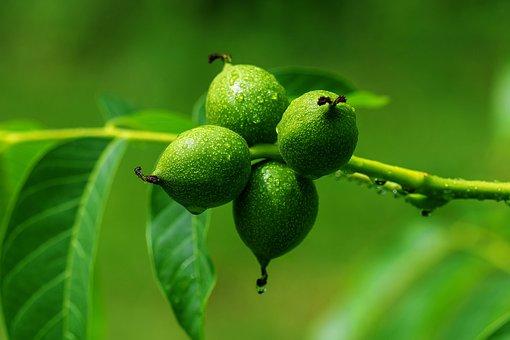 Walnut, Leaves, Nuts, Fruit Bowl, Walnut Leaves