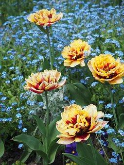 Flowers, Yellow, Paris, Park, Parc Des Buttes, Chaumont