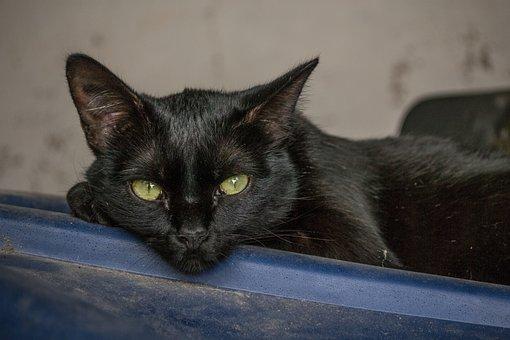 Cat, Black Cat, Pet, Black, Feline, Animal, Domestic