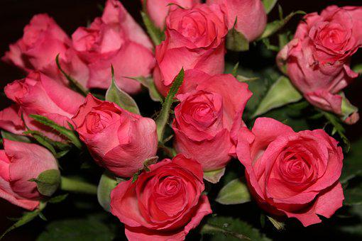 Bouquet Of Roses, Pink Roses, Rose, Bouquet, Blossom