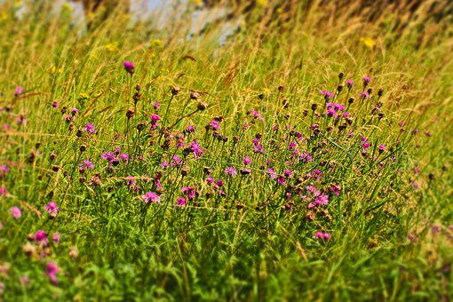 Field, Flowers, Nature, Summer, Plant, Yellow, Pink
