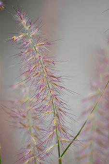 Grasses, Plant, Nature, Meadow, Green, Blade Of Grass